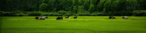cropped-wild_horses_3-wallpaper-1920x1200.jpg